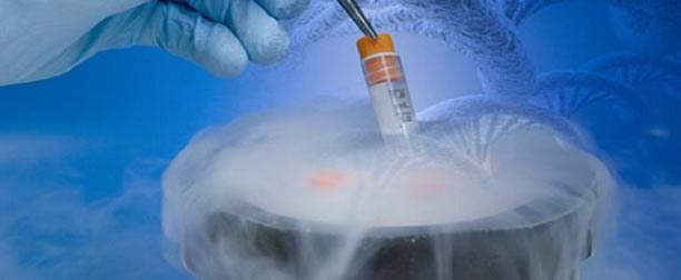 CRIOPRESERVACIÓN DE LA CEPA Corynebacterium diphtheriae EMPLEADA EN LA PRODUCCIÓN DE TOXOIDE DIFTÉRICO